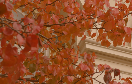 Fall leaves and architectural details